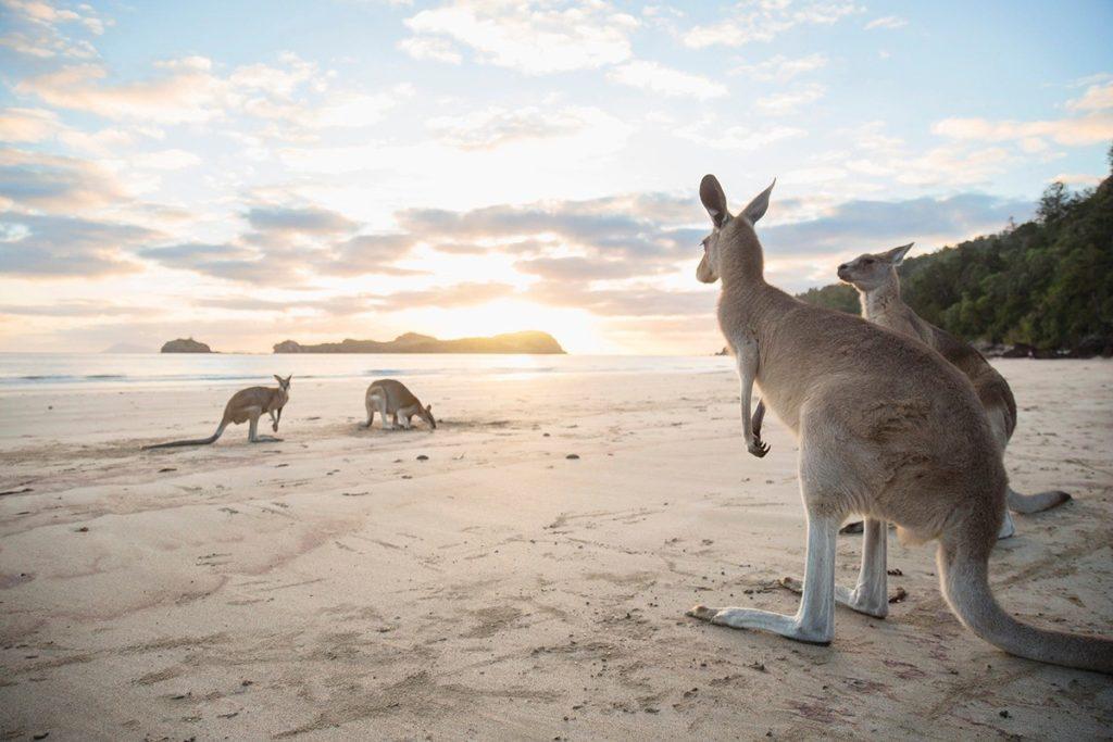 IL QUEENSLAND IN AUSTRALIA CONTINUA A FARCI SOGNARE!